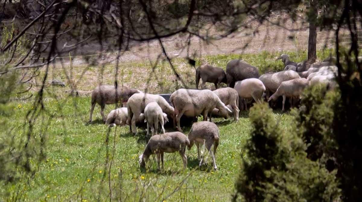 le jt montagne l agro pastoralisme en montagne 8 mont blanc