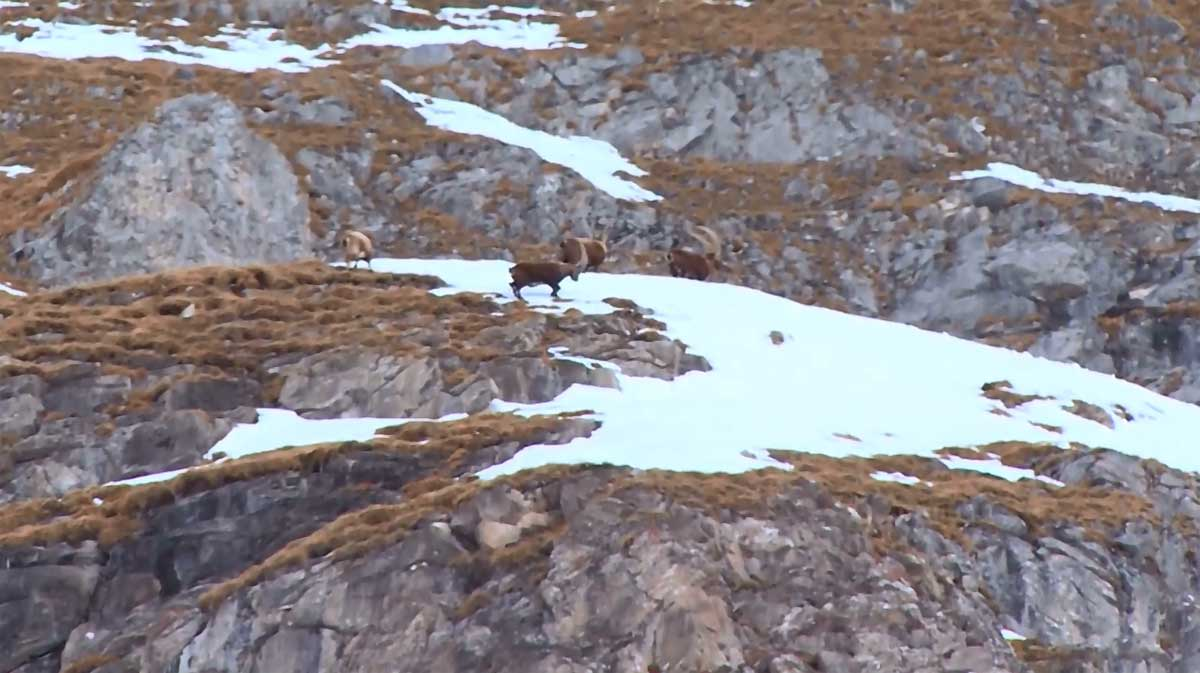 destination montagnes pralognan la vanoise 8 mont blanc